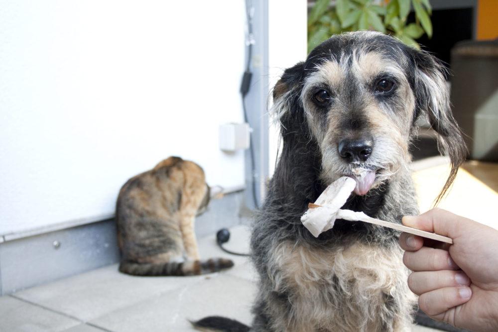 DIY Hundeeis selber machen