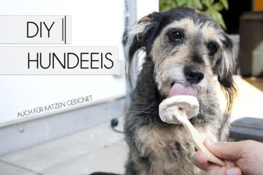 DIY | Hunde-Eis selber machen | 5 Rezepte + Anleitung